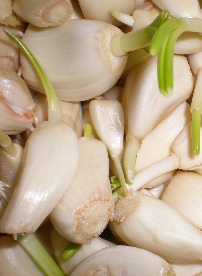 VO-garlic-cloves4
